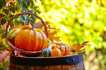 Autumn composition of pumpkins. Outside background