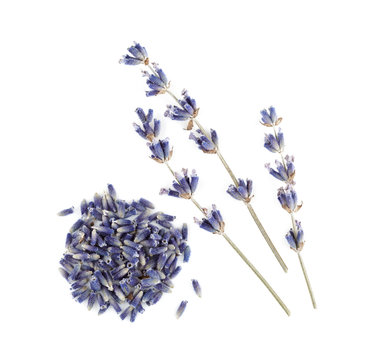 Dry lavender isolated on white background.