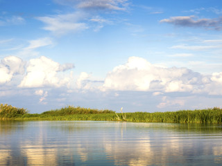River with reed reflected in the water, Danube Delta
