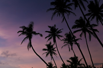 Beautiful palm trees silhouettes at evening on a tropical beach