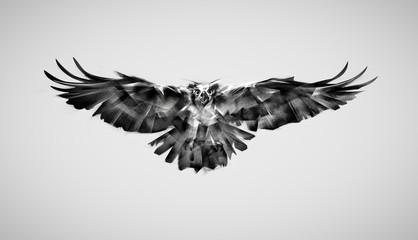 drawing falcon bird of prey in flight