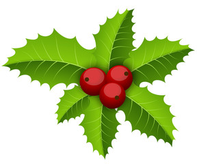 Christmas holly branch decoration vector illustration.