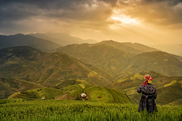 Tribal farmer in costume of Hmong on Rice fields on terraced of