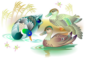 Illustration of beautiful ducks family swimming in a pond, vector cartoon image.
