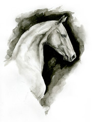 Ahalteke ink horse