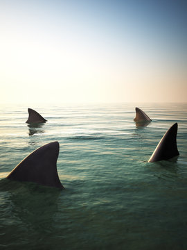 Shark fins circling above the ocean water. 3d rendering