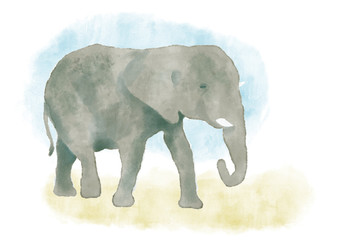 Watercolor elephant hand painted illustration from animals collection