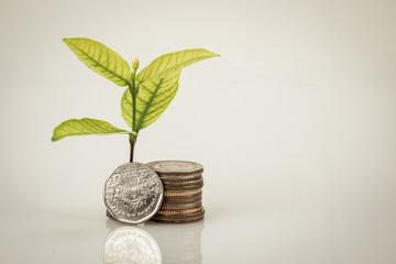 save money for investment concept plant growing out of coins money with filter effect retro vintage style