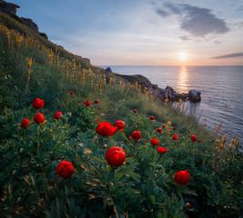 Poppies, Yaylata Reserve, Kavarna, Bulgaria, Europe