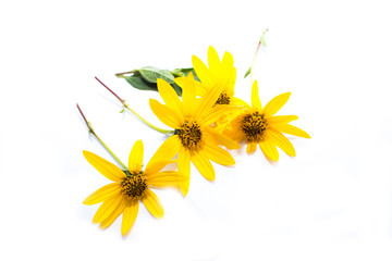 Yellow flower set closeup isolated on white background