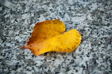 concept mort - feuille d'automne sur pierre tombale