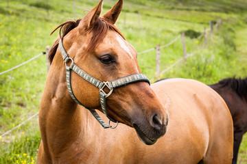 Horse Portrait Side