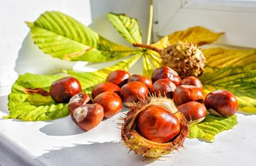 chestnut on a table closeup