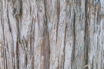 Cedar tree bark background