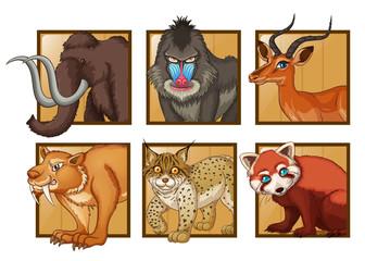 Wild animals on square frame