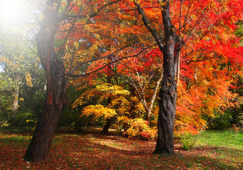 Sun shines on trees with red and yellow leave