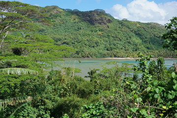 Green vegetation landscape from the heights of the island of Rurutu, south Pacific ocean, Austral archipelago, French Polynesia