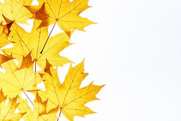 Maple leaves frame on white