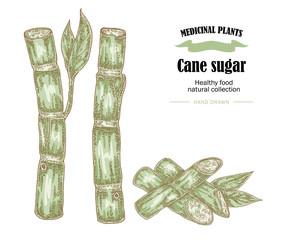 Cane sugar vector illustration. Hand drawn medicinal plants