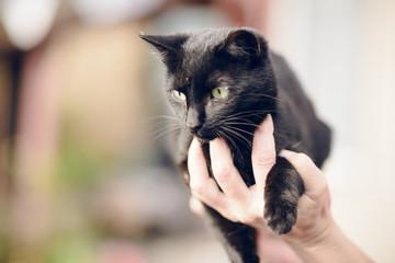 human hand holding a black cat