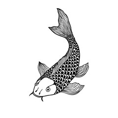 beautiful koi carp fish illustration in monochrome. Symbol of love, friendship and prosperity