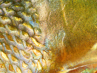 Close up of fish skin with scales. Natural background from Northern Pike (Esox Lucius).