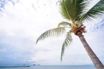 Tropical resort. Palms against beautiful blue sky near the ocean shore.