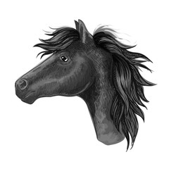 Black mare horse sketch for riding club design
