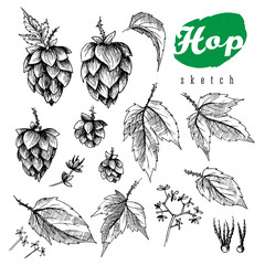 Beer hops element design, hand drawn hops cones, hops leaves and seeds, black and white sketch illustration collection.