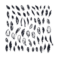 Doodle ink decorative feathers. Hand drawn traced design set.