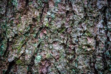 pine tree cortex texture
