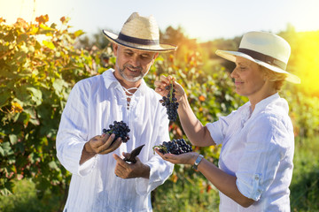 Male and female winemaker tasting grapes