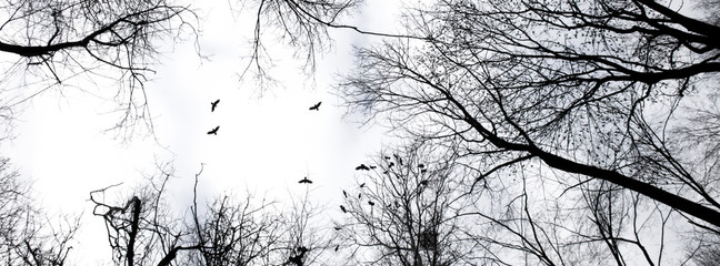 header panorama dark silhouette of trees
