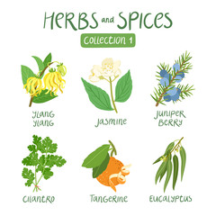 Herbs and spices collection 1