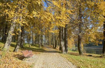 Autumn scene.Sunny autumn day in park.