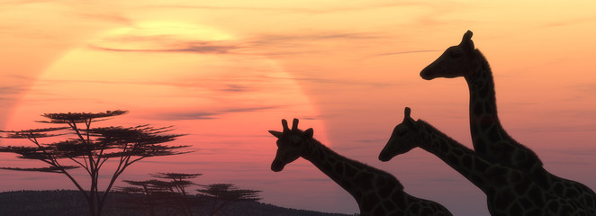 The giraffe silhouette