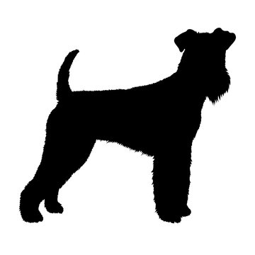 Airedale dog vector illustration style  silhouette black