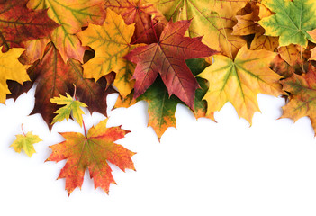 Border of colorful autumn maple leaves