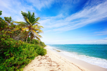 Exotic beach with palm trees in Caribbean. Cap Macre Beach, in search of tranquility, near Anse Michel Beach, Cap Chevalier, Martinique, Caribbean