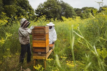Beekeepers removing honey frame from beehive