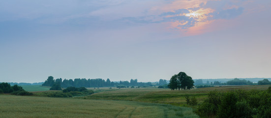 panorama of a meadow at sunset
