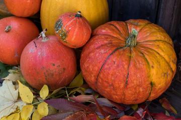 Big bright orange pumpkins on old dark wooden background. Autumn halloween background.