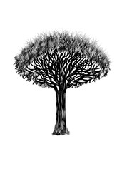 Dragon-tree. Black silhouette tree on white background. Grapfic art.