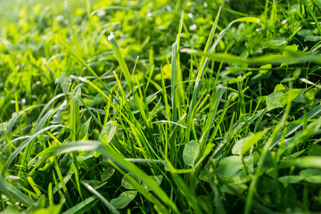 Abstract natural background by the fresh grass