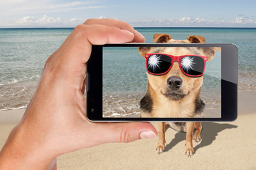 Dog sunglasses sit beach posing photo taken phone