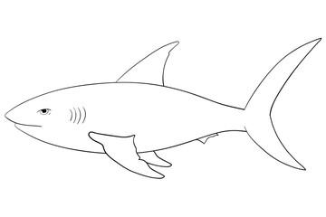 Shark. Hand drawn outline sketch