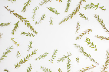 Frame with branches, leaves and petals isolated on white