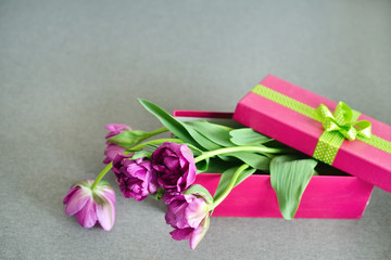 Fresh spring purple flowers bouquet in gift box, Place for text