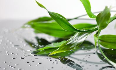 Fresh green wet bamboo leaves on grey glass