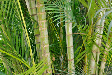 Green background of bamboo and palm trees